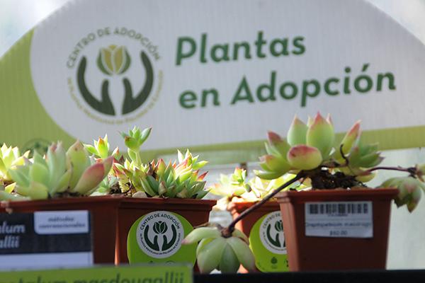 Adopta una planta